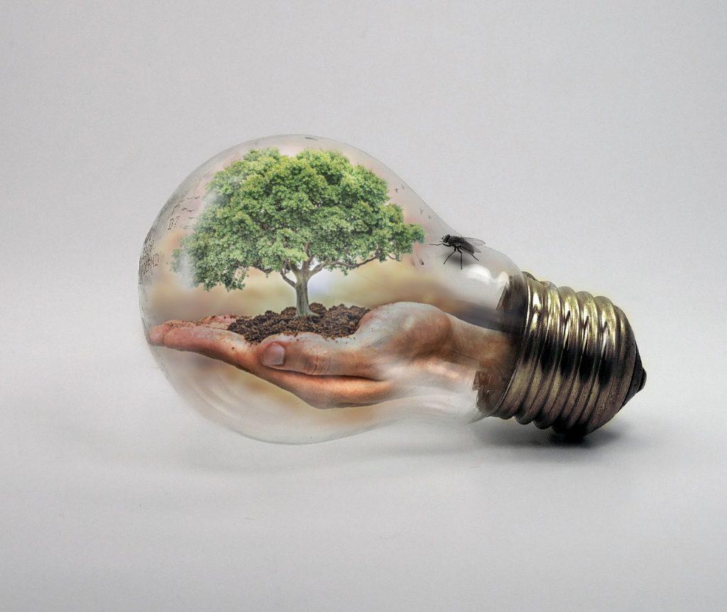 bulb-2368396_1280